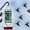 Hummingbirds and fellow Methodists : This gallery is dedicated to my new friends, the Gibbs, Kay and Bill (alias Will, LOL).  It was because of their party high atop Cashiers, and allowing me to photograph from their beautiful porch that I was able to capture these images.